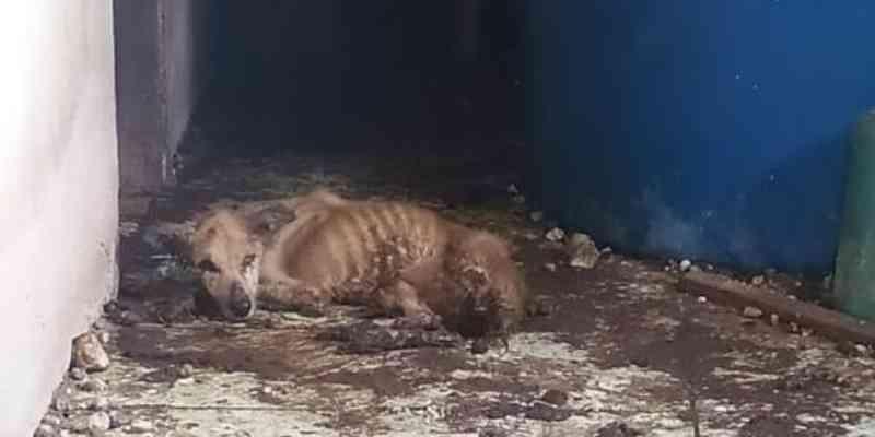 PM resgata cães trancados há mais de ano em Salvaterra, na Ilha do Marajó, PA