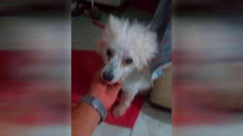Cadela é morta com golpe de cassetete por segurança de empresa em Baía da Traição, PB; 'foi horrível', diz tutor do animal