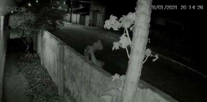 Identificada mulher que jogou gato em casa onde havia cachorro de grande porte, em João Pessoa, PB
