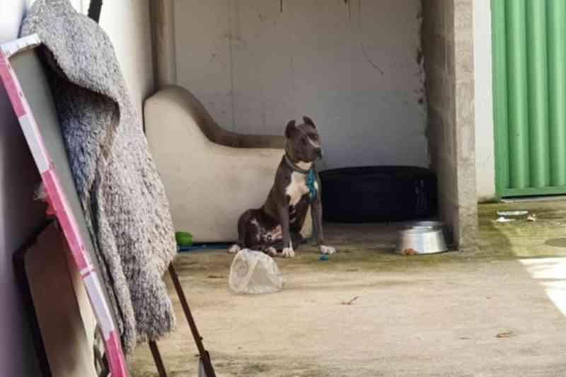 Polícia investiga denúncias de maus-tratos contra 25 cães no Gama, DF