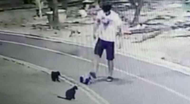 Homem mata vários gatos e câmeras de segurança registram crueldade no Recife, PE