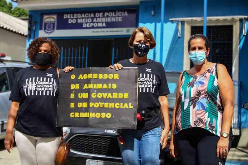 Suspeito de assassinar gatos na zona norte do Recife (PE) não aparece para depor na Depoma na manhã desta sexta