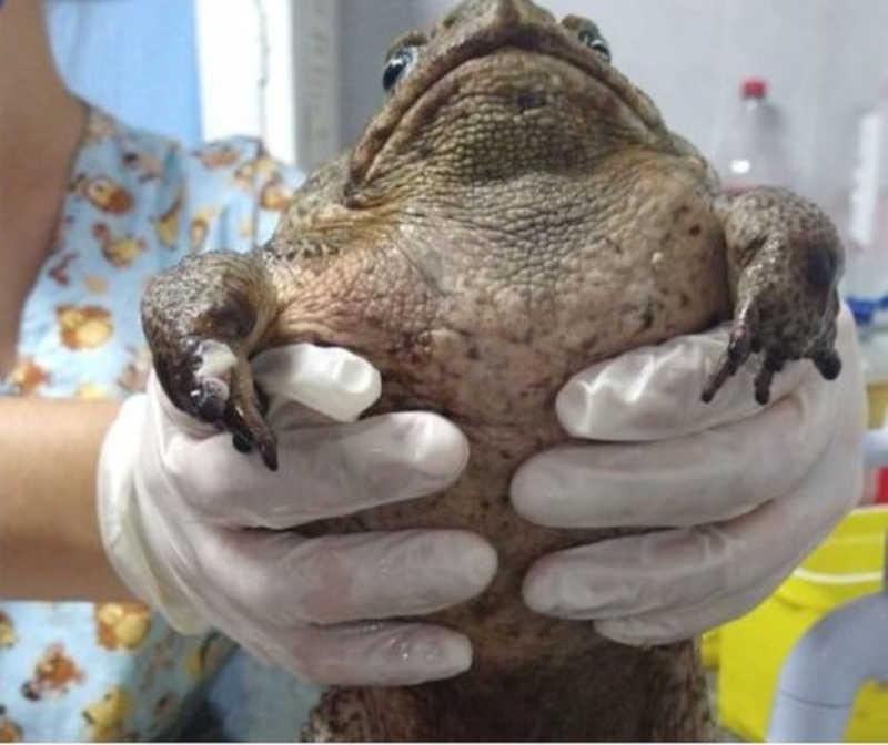 Sapo é encontrado dentro de cemitério com a boca colada e outras lesões no Grande Recife