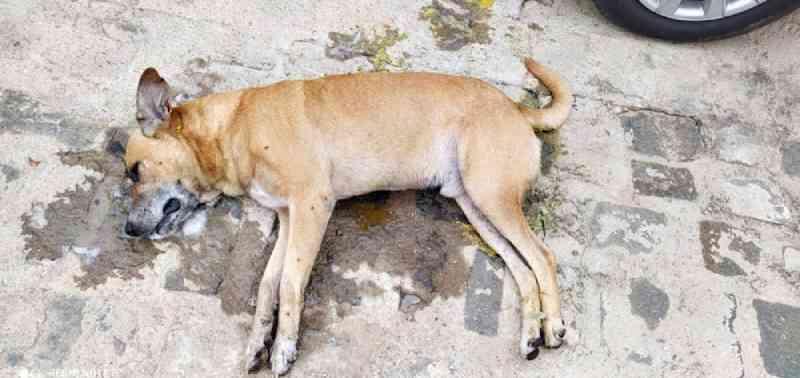 Animais são mortos por envenenamento em cidade do Piauí; fotos