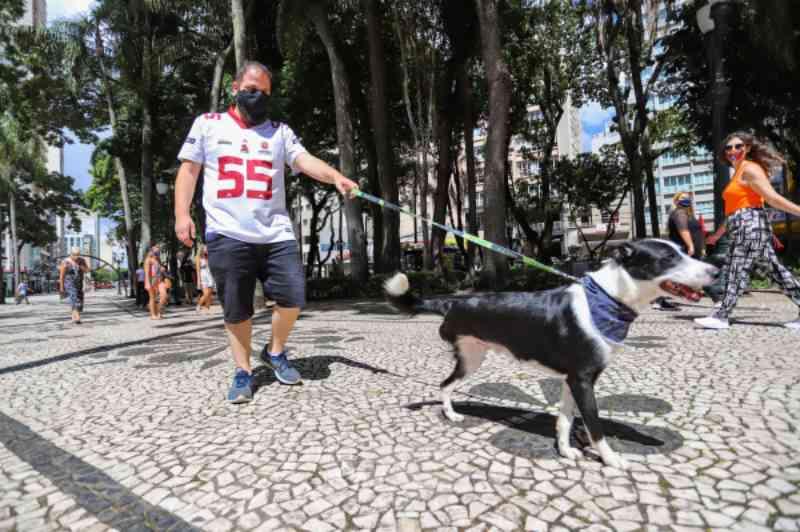 Animais amputados têm vida normal e querem uma nova família em Curitiba, PR