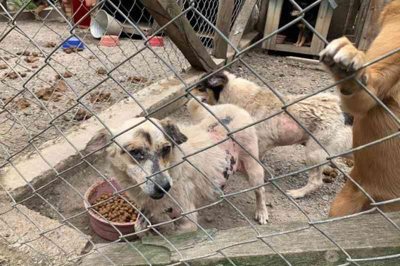 Protetora de animais é presa por maus-tratos em canil de Quatro Barras, PR