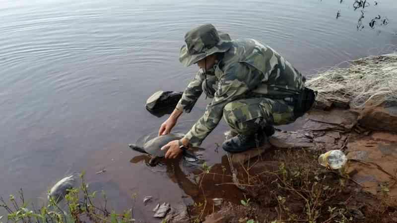 Cágados de espécie rara são resgatados em rede de pesca no Paraná