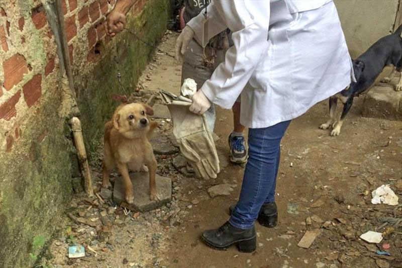 Inscrições para curso de atendimento a casos de maus-tratos de animais estão abertas, no Paraná