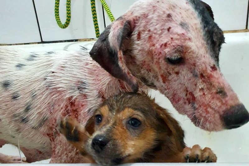 Em 2020, o canal 181 recebeu 50.659 denúncias; destas, 7.076 foram sobre maus-tratos a animais domésticos — Foto: Divulgação/ONG 4 Patas
