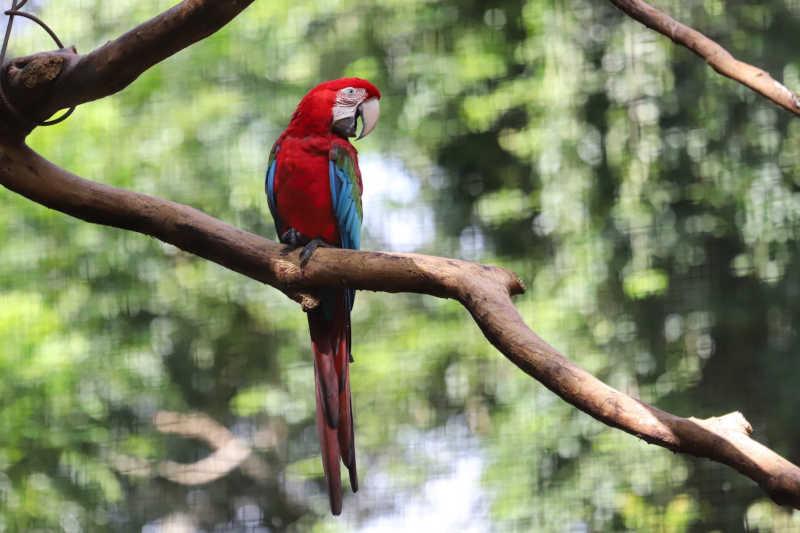 Gaema de Curitiba ajuíza ações contra 12 pessoas investigadas por captura e comercialização ilegal de aves silvestres