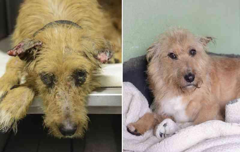 Omissão do Ministério Público bloqueia adoção de 96 cães e 10 gatos resgatados de maus-tratos em Portugal
