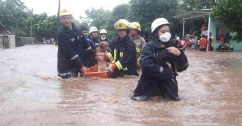 A incrível corrente de bombeiros voluntários que se juntou para salvar cães após tempestade