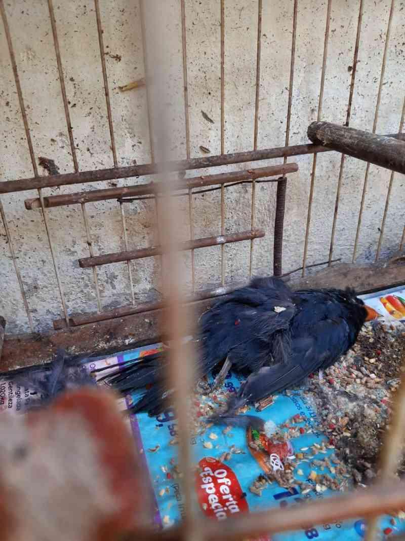 Mais de 600 animais morrem em 4 meses em centro de tratamento do Ibama no RJ