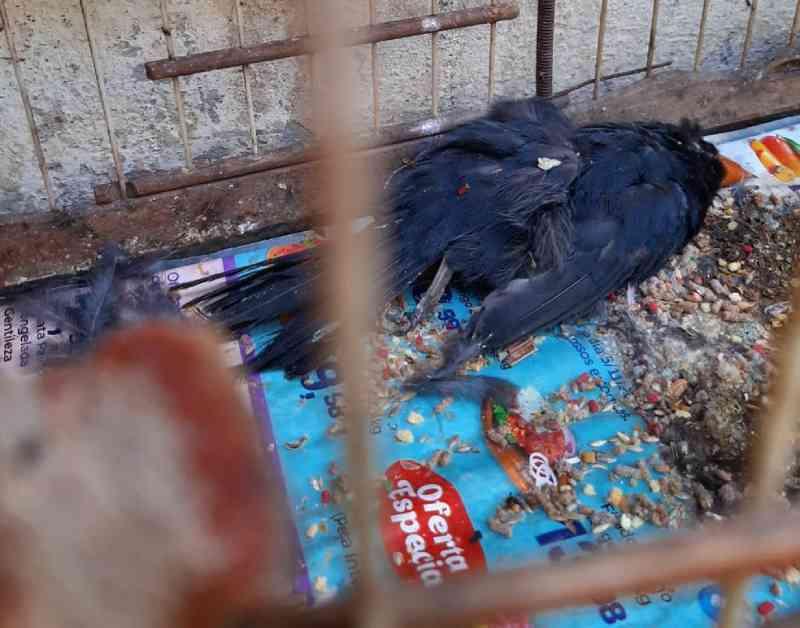 Ibama manda contratar pessoal para centro de tratamento onde mais de 600 animais morreram em 4 meses