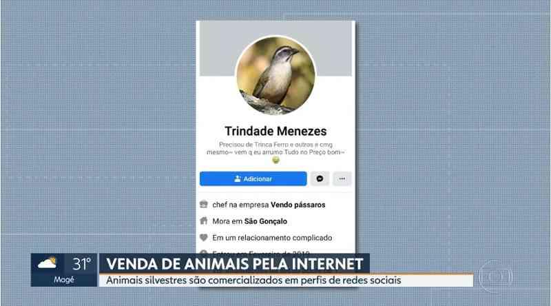 Polícia do RJ investiga tráfico de animais silvestres pela internet