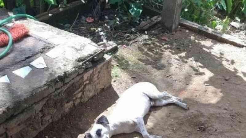 Homem mata cachorro de vizinho a pedrada após animal urinar em seu calçado, em RO