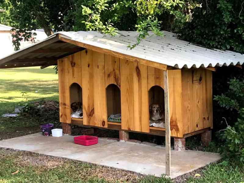 Voluntários constroem casinhas para proteger cães abandonados em Iraí, RS