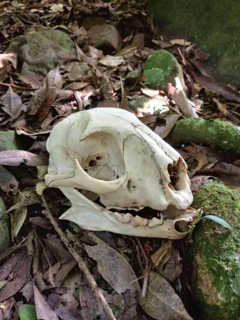 Guardas identificam matança de animais no Parque Estadual do Turvo, em Derrubadas, RS