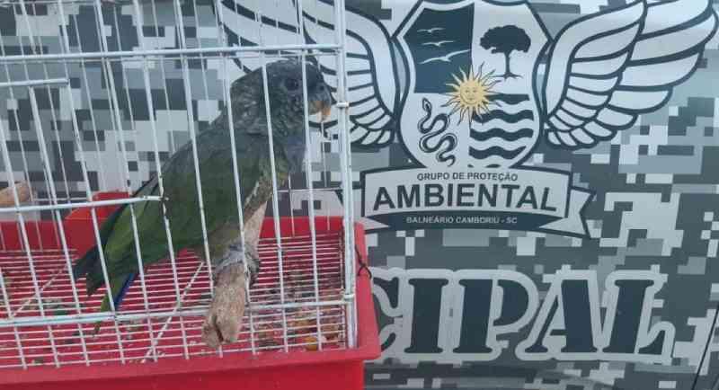 Guarda Ambiental resgata maitaca que ficava exposta ao sol em Balneário Camboriú, SC