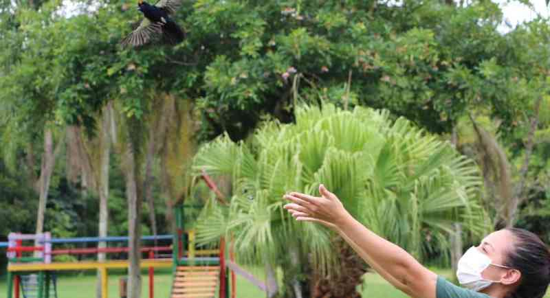 Sete pássaros resgatados são soltos em Balneário Camboriú, SC