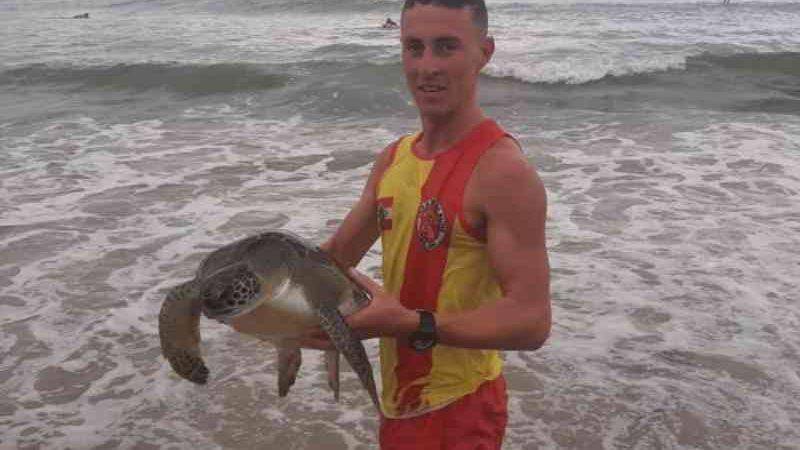 Vídeo: tartaruga é fisgada por pescador em praia de Barra Velha, SC
