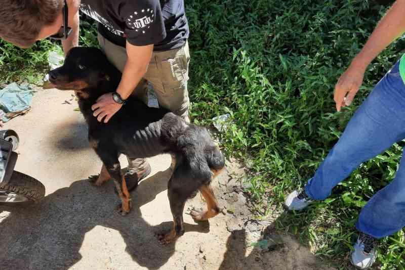 Cachorros mantidos sem água e sem comida são resgatados em Blumenau, SC