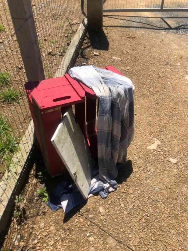 Vídeo: mulher é flagrada abandonando gatos em Blumenau, SC
