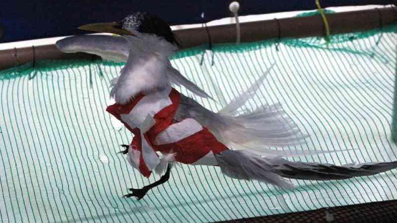 Chuva de granizo deixa sete aves marinhas mortas e duas feridas em Florianópolis; FOTOS
