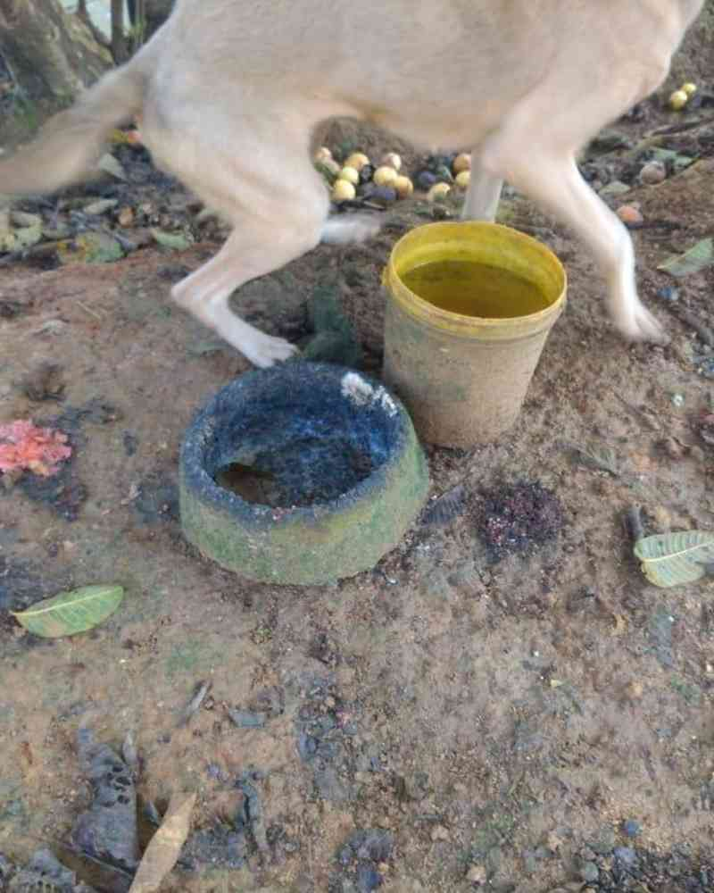 Homem é preso por manter cachorros em situação de maus-tratos em Guaramirim, SC