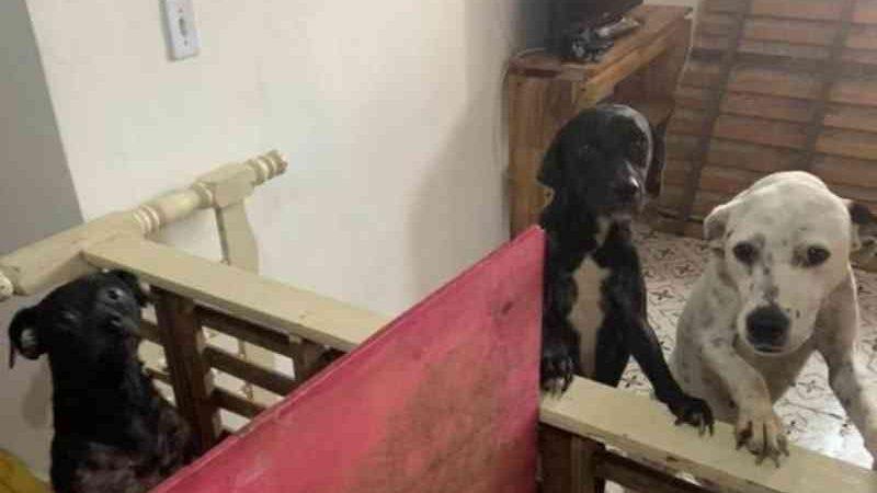 Cães são resgatados de situações de maus-tratos em cidades de SC