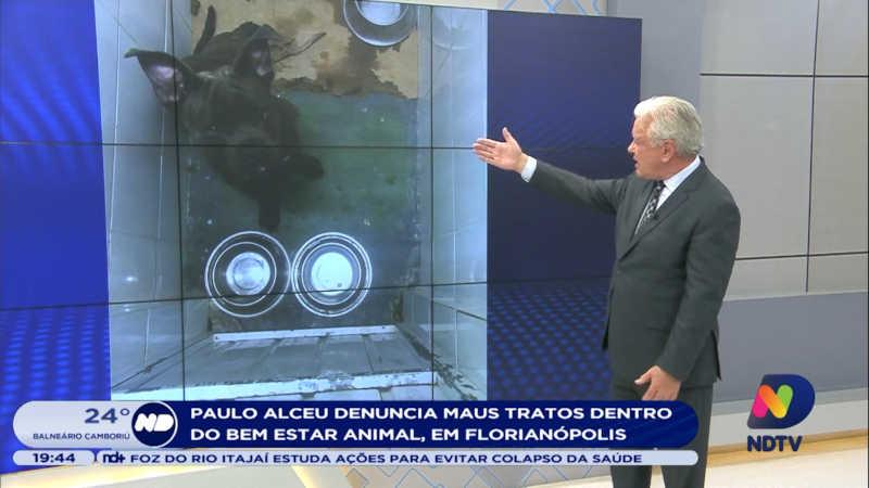 Ex-voluntária denuncia maus-tratos dentro do Bem-estar Animal de Florianópolis, SC