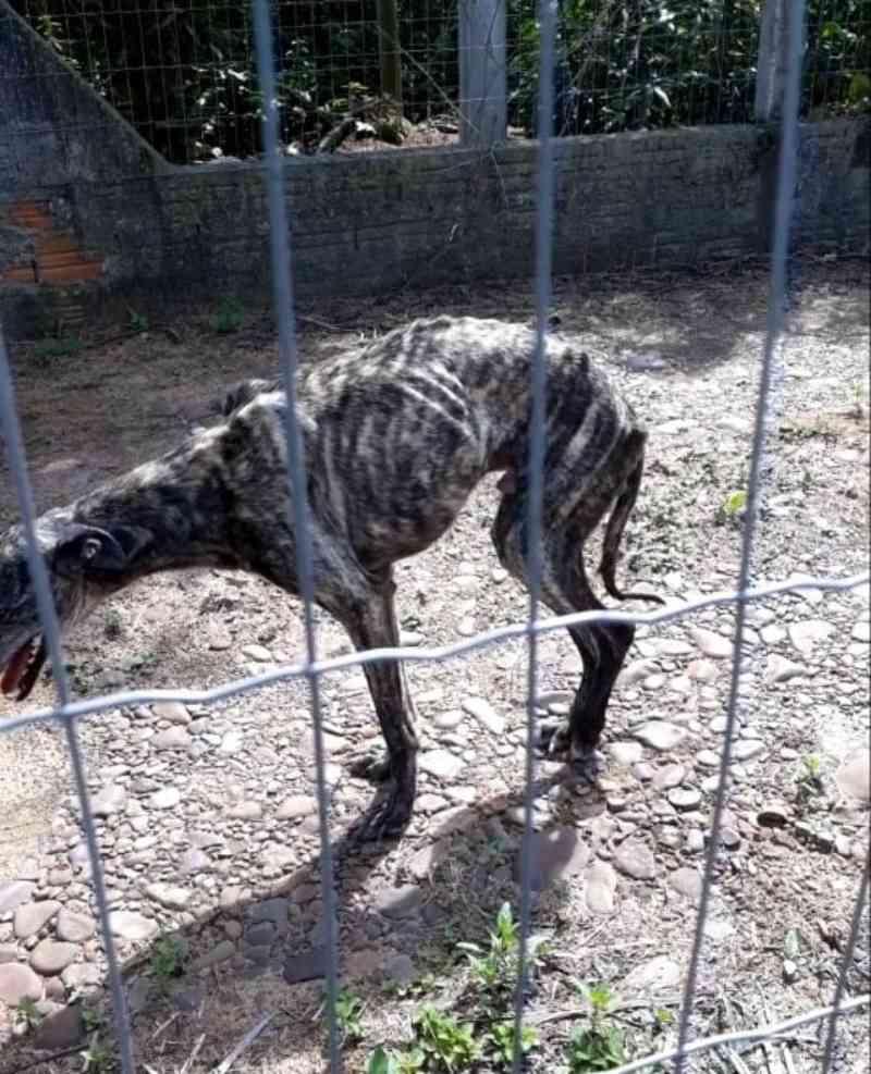 Homem é preso por maus-tratos a animais em Turvo, SC