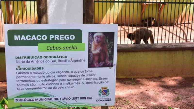 Sem visitas, animais do zoo de Araçatuba (SP) estão mais calmos