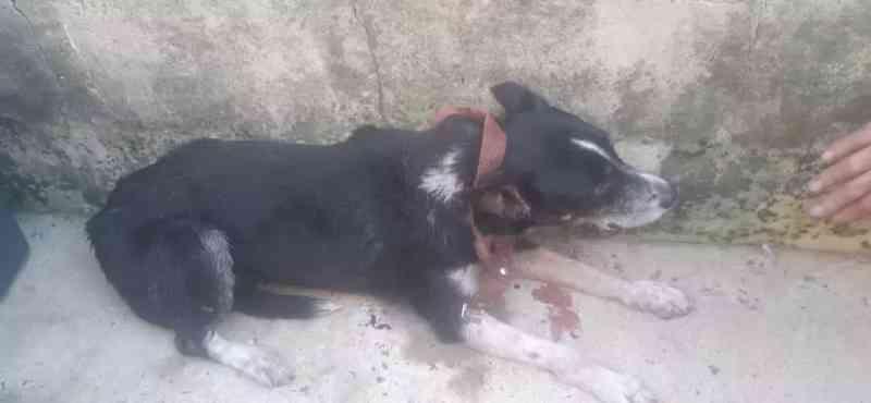 Cachorros em situação de abandono são resgatados em Avaré, SP