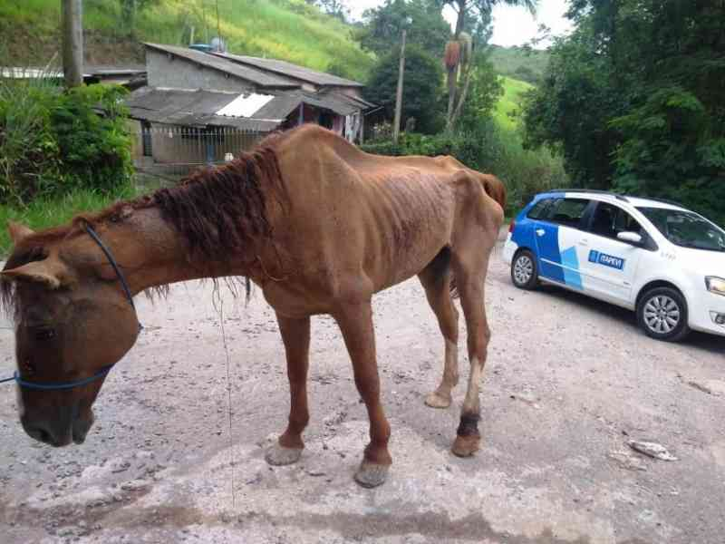 Cavalo resgatado em Barueri (SP) estava com sinais de maus-tratos
