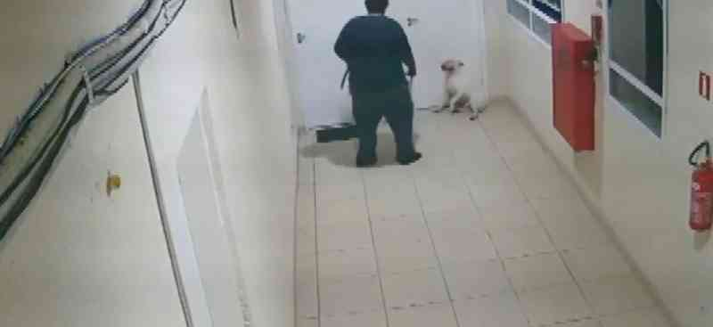 Homem é preso após câmera registrar agressões contra cachorro em Campinas, SP; vídeo