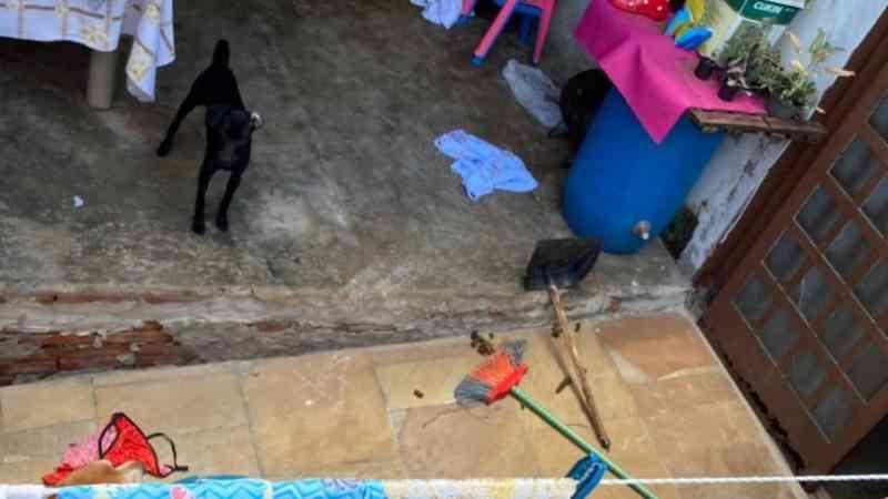 Protetores resgatam cachorros de casa onde menino era torturado, em Campinas, SP