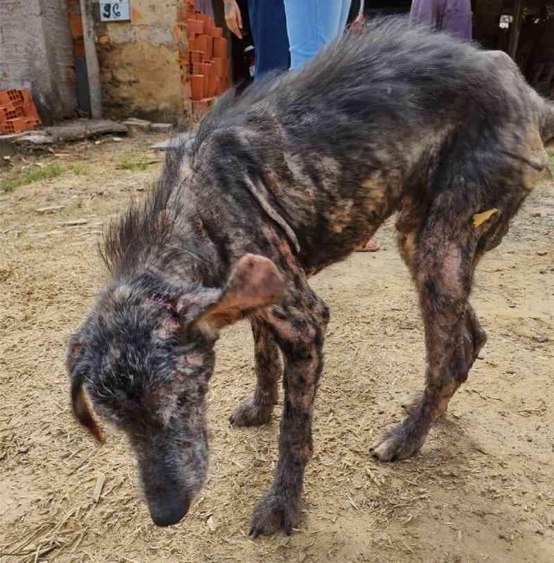 Zoonoses de Capivari (SP) resgata três cachorros em situação de maus-tratos; suspeita é presa