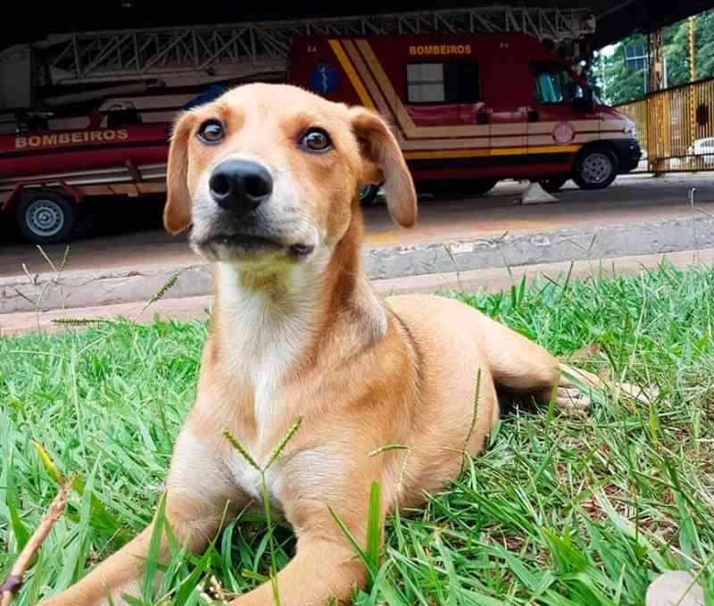 Cachorro vítima de maus-tratos é adotado por bombeiros e vira mascote do quartel