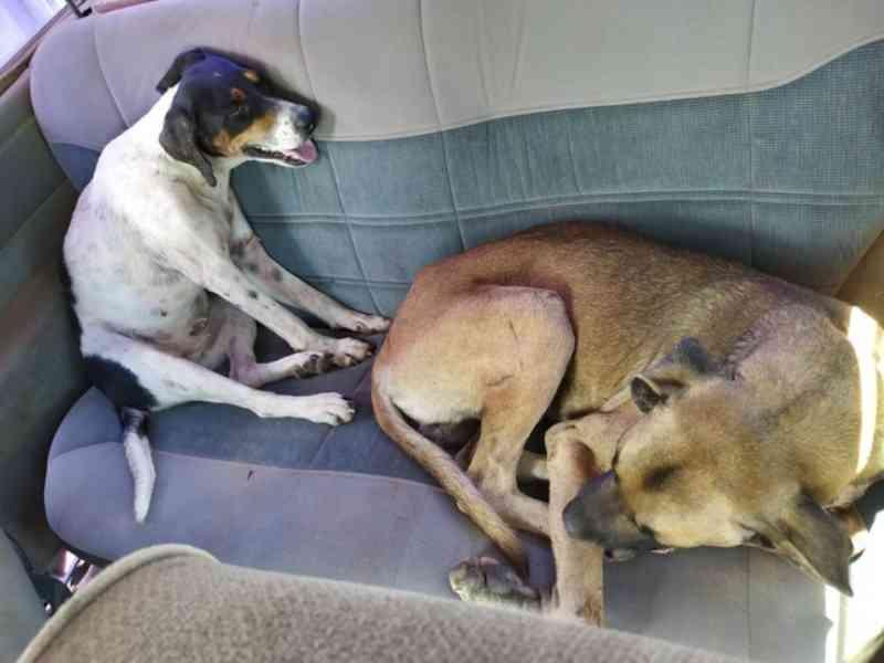 Caça: cães são resgatados feridos e trancados em porta-malas de carro em Charqueada, SP