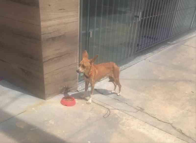 Homem amarra e abandona cachorro em petshop em Franca, SP; assista