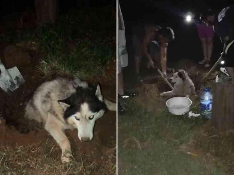 Cão sequestrado em furto de sítio é encontrado parcialmente enterrado em Guareí, SP