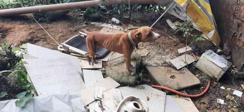 Após denúncias, equipes de Guarujá (SP) resgatam cadela vítima de maus-tratos