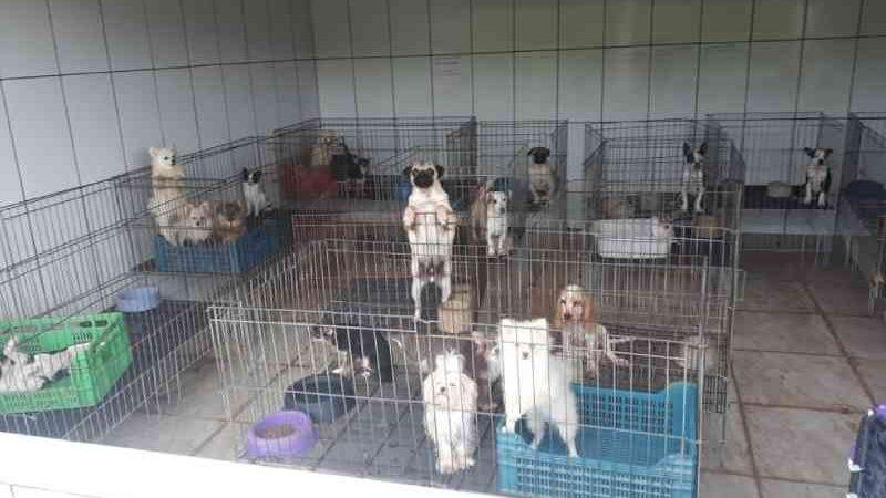 Justiça nega indenização de R$ 5 milhões a dona de canil após resgate de cães em Piedade, SP