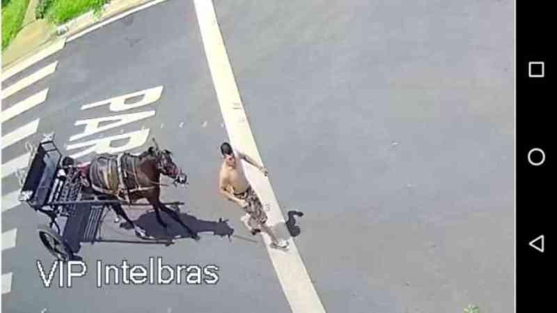 Vídeo: Homem é flagrado agredindo cavalo na zona Norte de Ribeirão Preto, SP