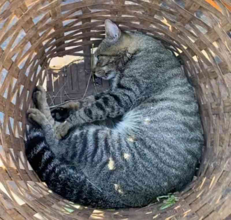 Advogado denuncia matança de gatos em condomínio de luxo em São José do Rio Preto, SP