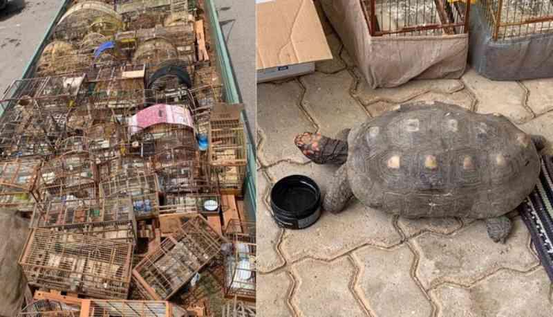 Grupo é detido suspeito de manter animais em cativeiro em Salto, SP