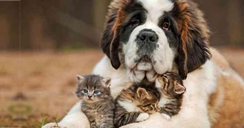 Prefeitura de Vinhedo (SP) vai criar Departamento de Bem-Estar Animal para desenvolver políticas públicas voltadas a essa população