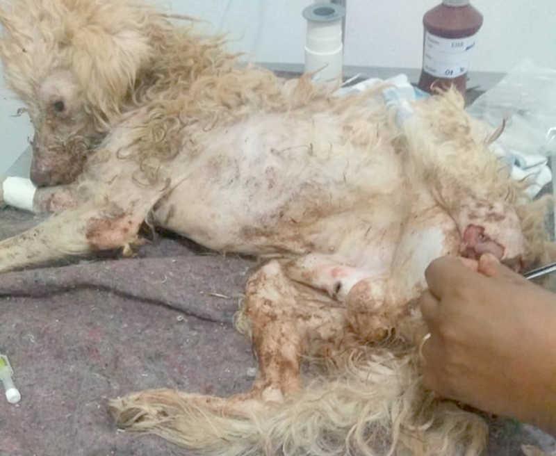 Moradora de Andradina (SP) multada em R$ 3 mil por maus-tratos a animal