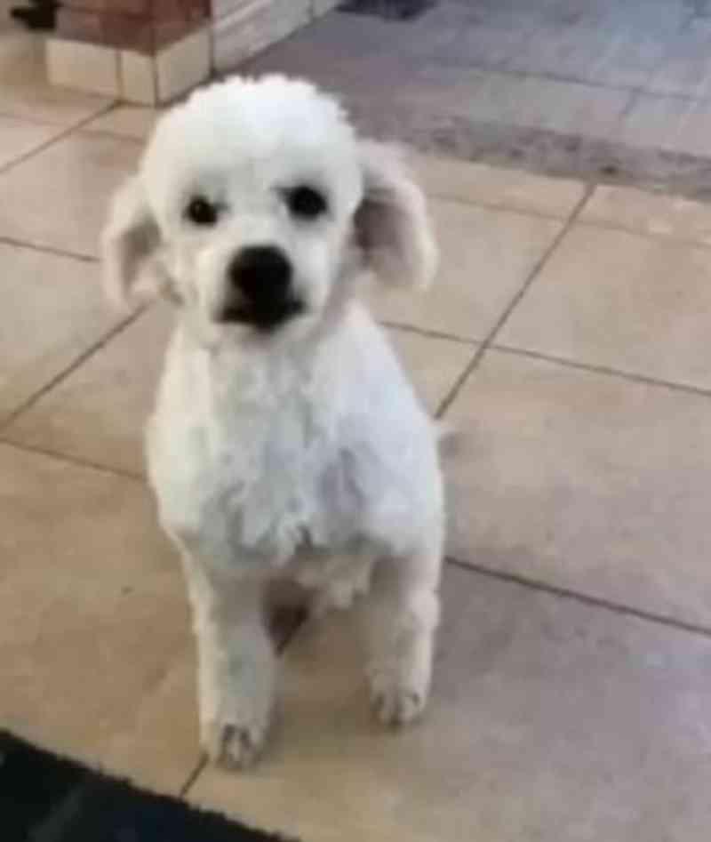 Cãozinho vítima de maus-tratos que teve pata amputada está totalmente recuperado